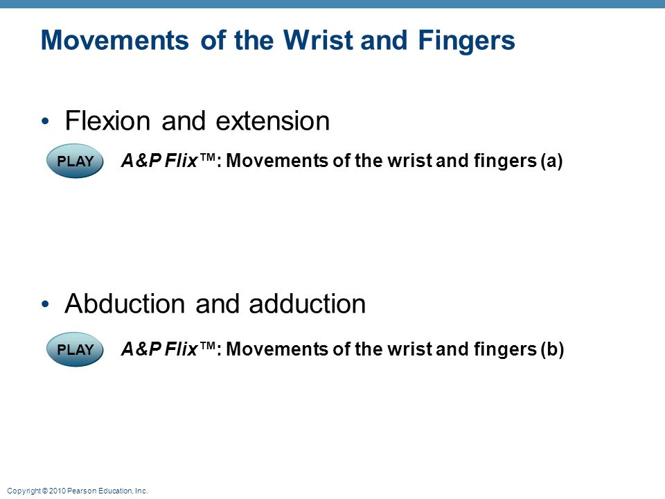Copyright © 2010 Pearson Education, Inc. Movements of the Wrist and Fingers Flexion and extension Abduction and adduction PLAY A&P Flix™: Movements of