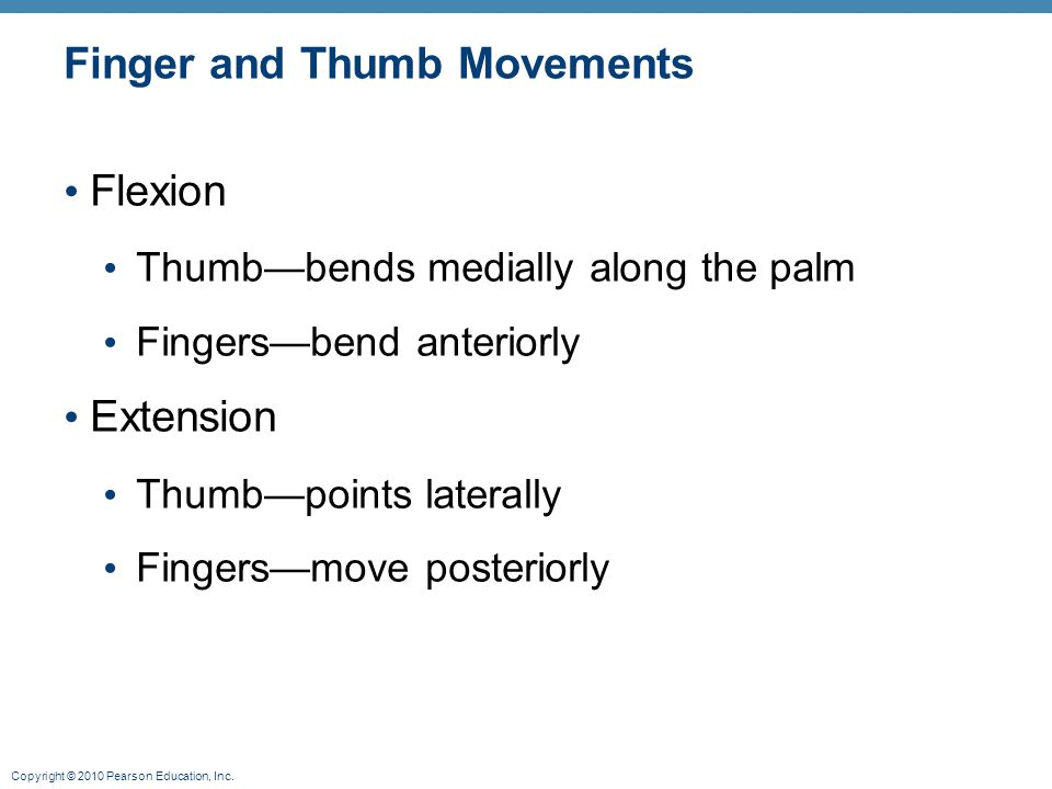 Copyright © 2010 Pearson Education, Inc. Finger and Thumb Movements Flexion Thumb—bends medially along the palm Fingers—bend anteriorly Extension Thum