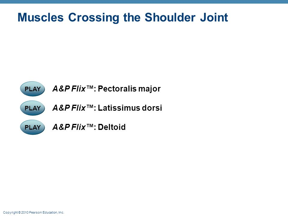 Copyright © 2010 Pearson Education, Inc. Muscles Crossing the Shoulder Joint PLAY A&P Flix™: Deltoid PLAY A&P Flix™: Latissimus dorsi PLAY A&P Flix™: