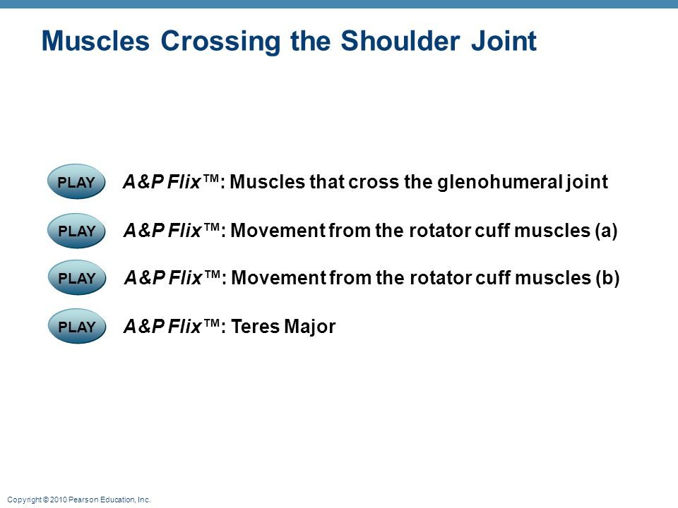 Copyright © 2010 Pearson Education, Inc. Muscles Crossing the Shoulder Joint PLAY A&P Flix™: Movement from the rotator cuff muscles (a) PLAY A&P Flix™
