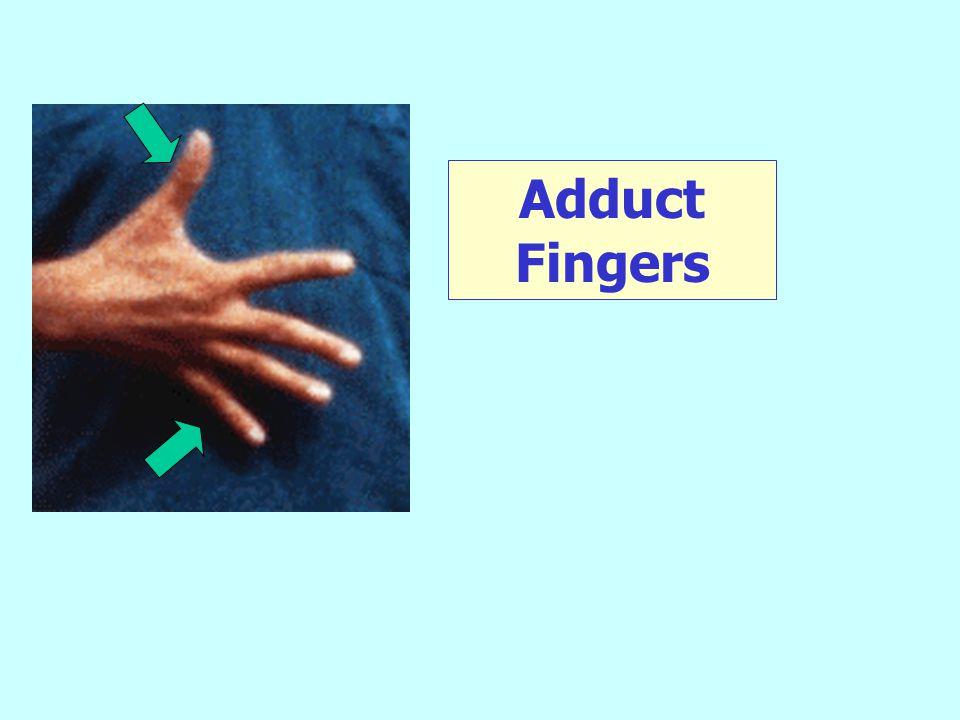 Adduct Fingers