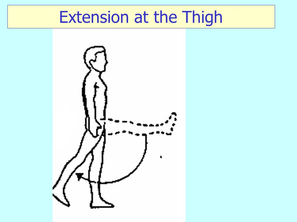 Extension at the Thigh