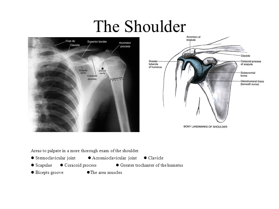 204. Shoulders: arms over head 207. Note: Shoulders: palpation during maneuvers (not over gown)