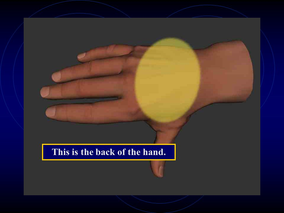 This is the back of the hand.