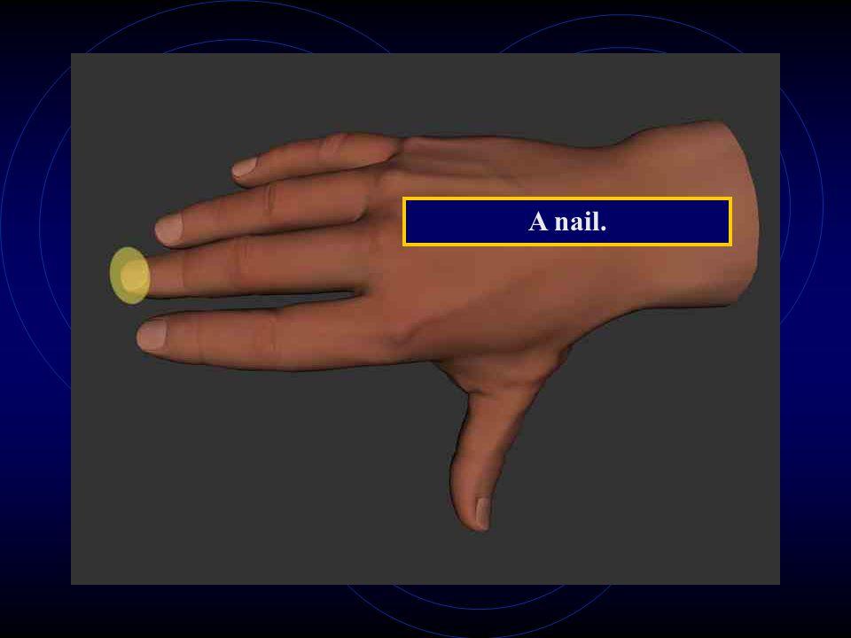 A nail.