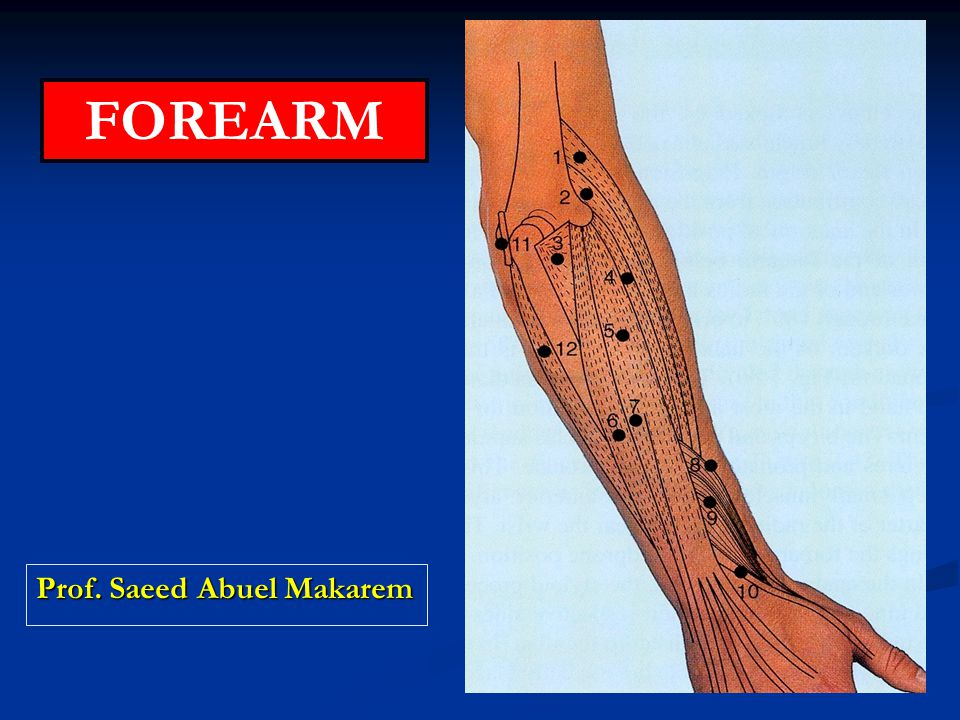 objectives By the end of the lecture you should be able to: By the end of the lecture you should be able to: Enumerates the group of muscles forming the forearm.