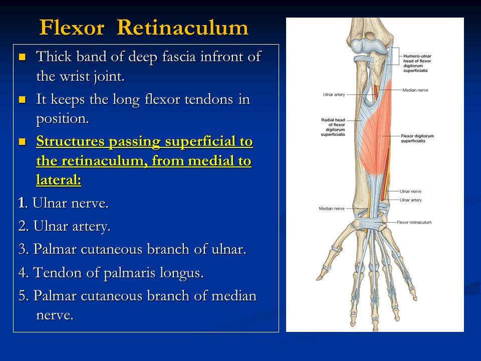 Dorsal Extensor Expansion It is formed by the union of the tendons of: Extensor digitorum, Extensor indicis, extensor digiti minimi, palmar & dorsal interossei and lumbricals muscles.