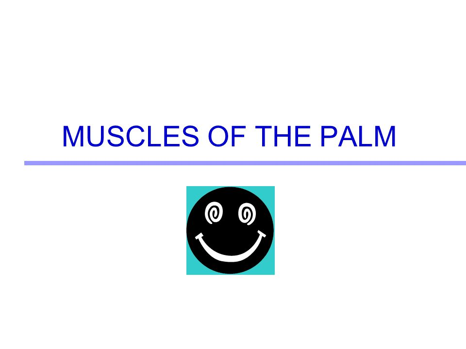 MUSCLES OF THE PALM