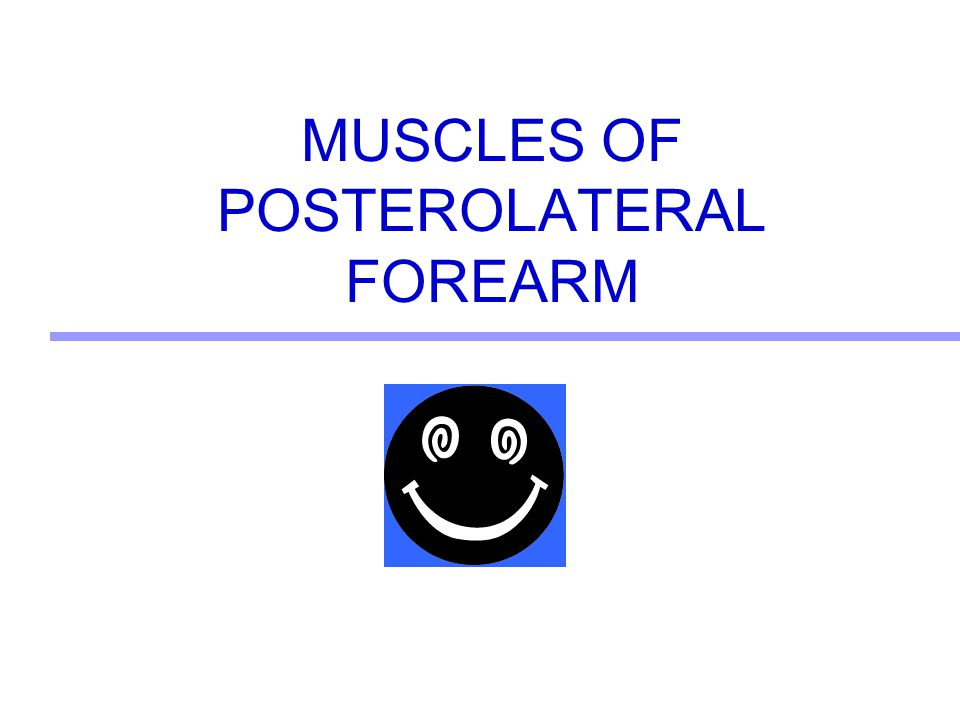 MUSCLES OF POSTEROLATERAL FOREARM