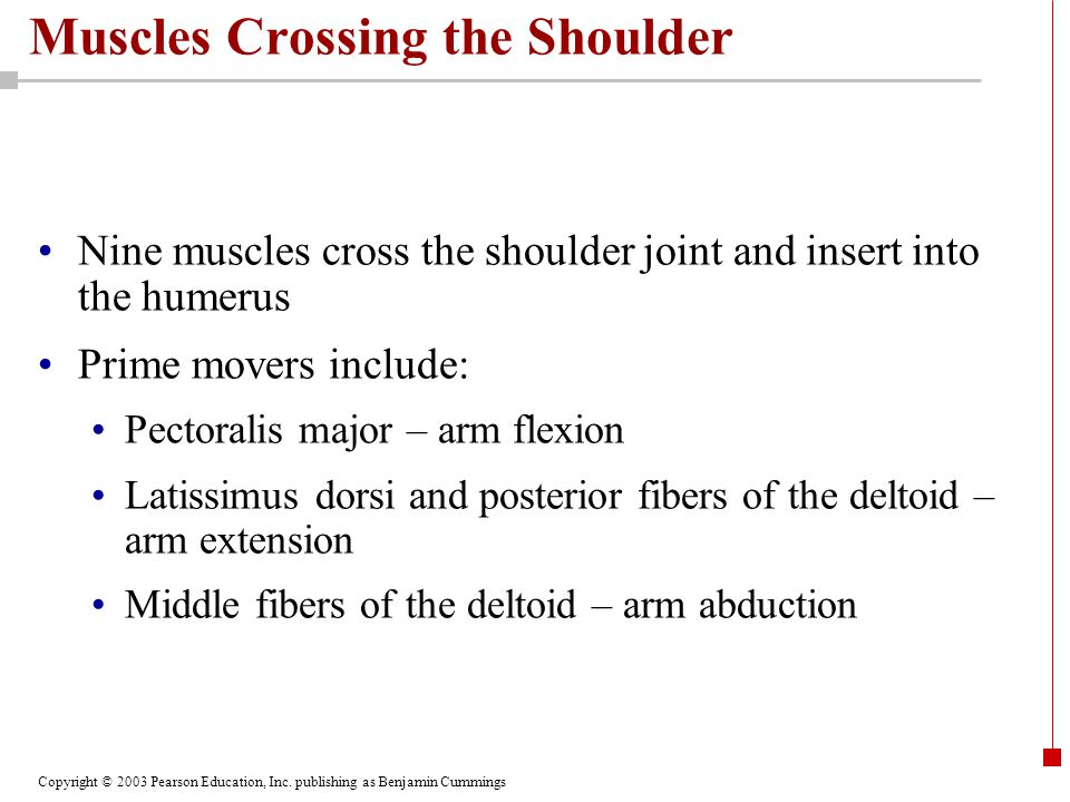 Copyright © 2003 Pearson Education, Inc. publishing as Benjamin Cummings Muscles Crossing the Shoulder Nine muscles cross the shoulder joint and inser