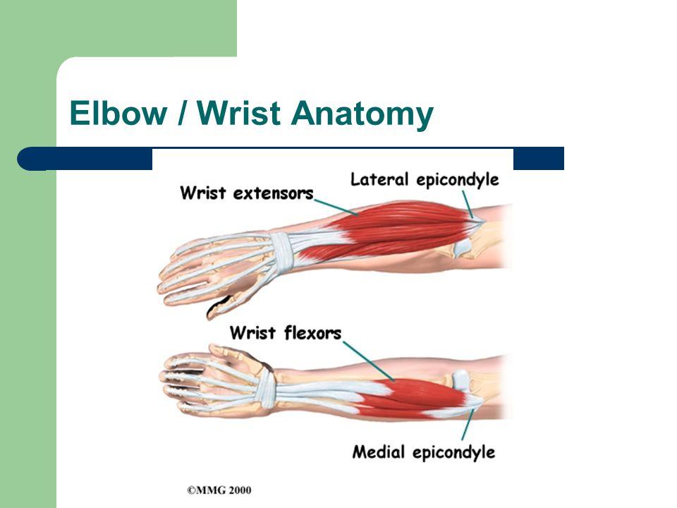 Elbow / Wrist Anatomy