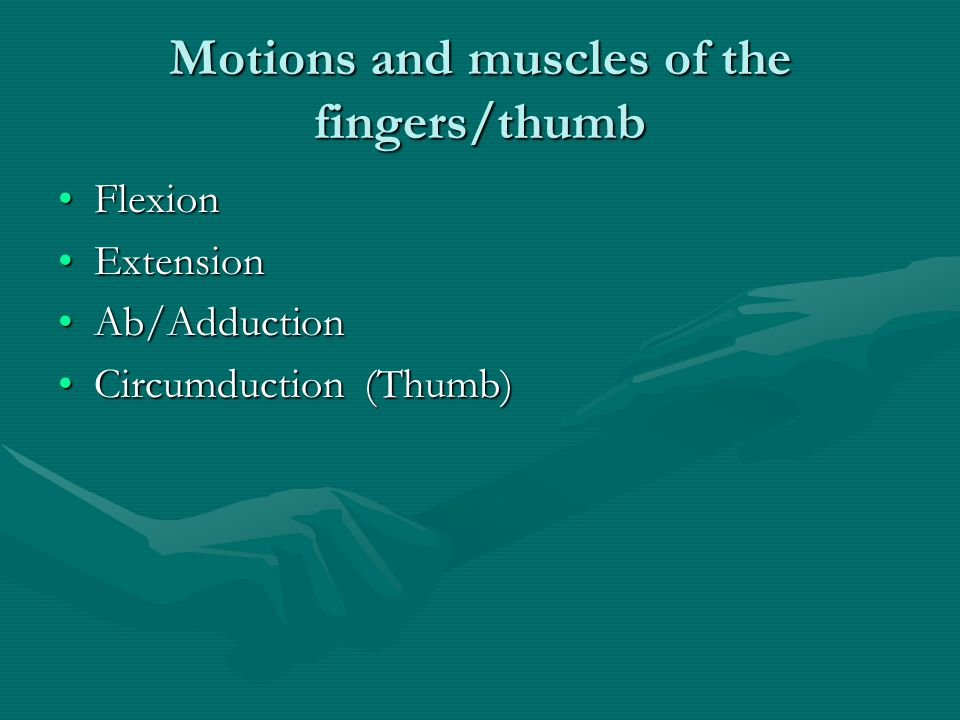 Motions and muscles of the fingers/thumb FlexionFlexion ExtensionExtension Ab/AdductionAb/Adduction Circumduction (Thumb)Circumduction (Thumb)