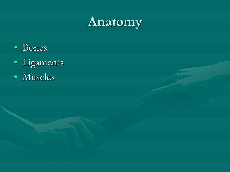 Anatomy BonesBones LigamentsLigaments MusclesMuscles