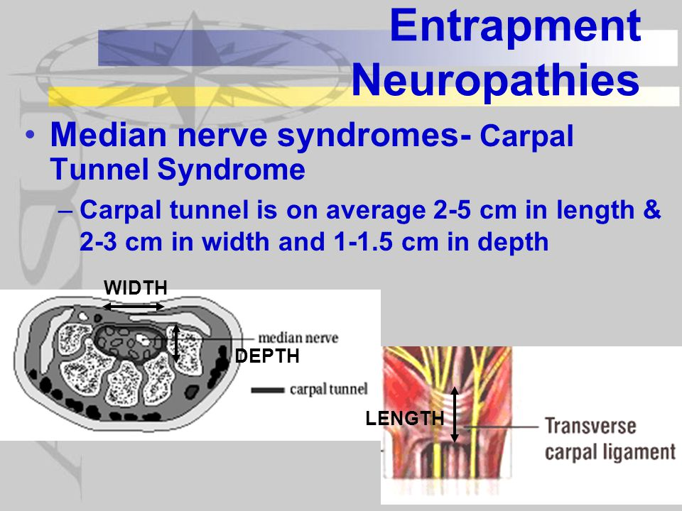 Entrapment Neuropathies Median nerve syndromes- Carpal Tunnel Syndrome –Carpal tunnel is on average 2-5 cm in length & 2-3 cm in width and 1-1.5 cm in depth WIDTH DEPTH LENGTH
