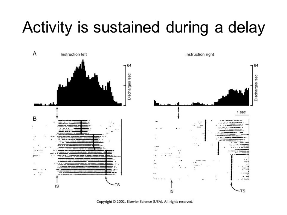 Activity is sustained during a delay