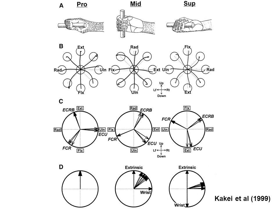 Kakei et al (1999)