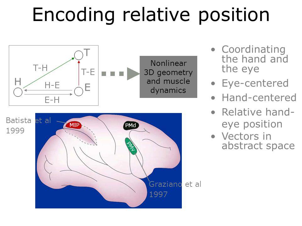 MIP PMd Nonlinear muscle dynamics Encoding relative position Nonlinear 3D geometry and muscle dynamics Batista et al 1999 Graziano et al 1997 H T E T-