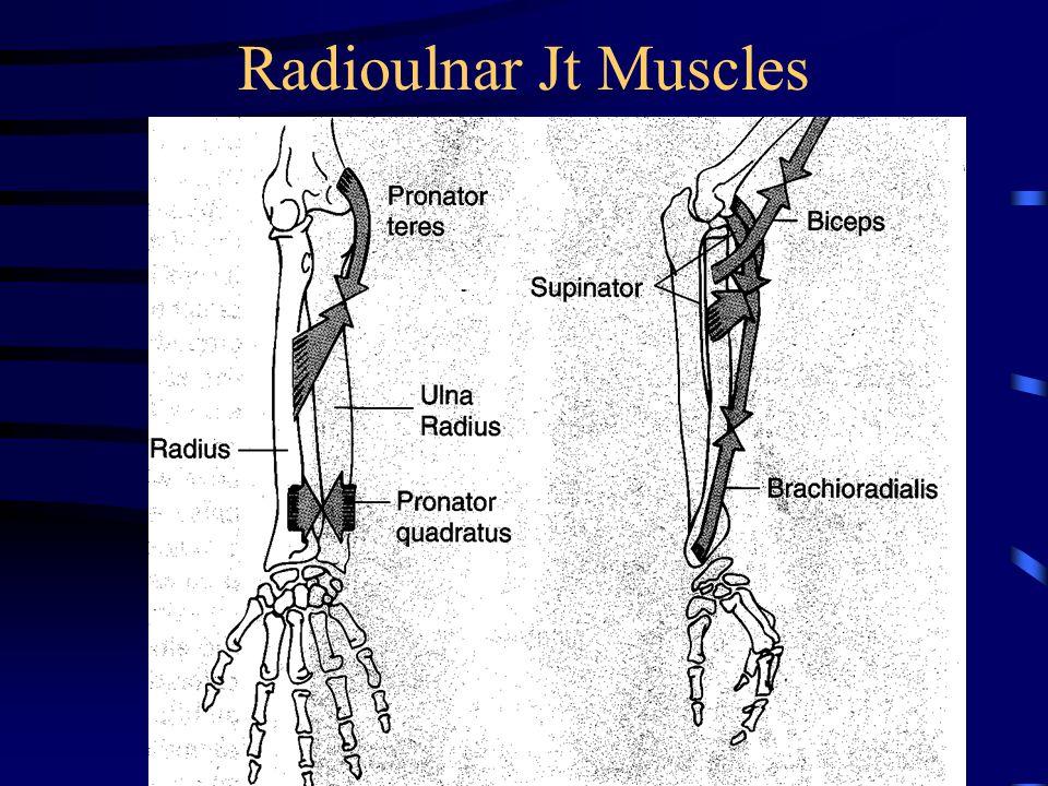Radioulnar Jt Muscles