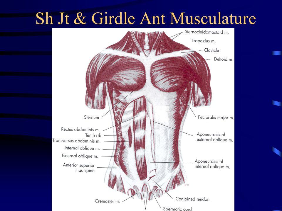 Sh Jt & Girdle Ant Musculature