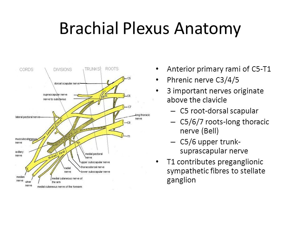 Classification of Brachial Plexus Palsy Age Pathological Anatomical Combination Traumatic – Traction, avulsion, penetrating wounds Infective – Cervical amyotrophy – Parsonage-Turner (viral brachial neuritis) Radiation induced Malignant – Pancoast tumour of the lung – Primary nerve tumours Iatrogenic – CVLs – Invasive angiography – Neck dissection
