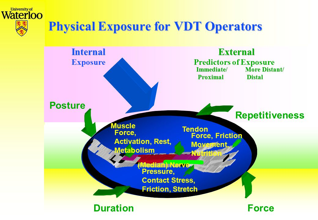 Physical Exposure for VDT Operators InternalExternal ExposurePredictors of Exposure Immediate/More Distant/ Proximal Distal Proximal Distal Posture Force Repetitiveness Muscle Force, Activation, Rest, Metabolism Tendon Force, Friction Movement, Nutrition Duration (Median) Nerve Pressure, Contact Stress, Friction, Stretch