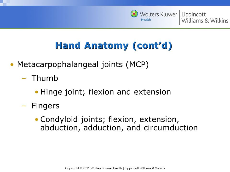 Copyright © 2011 Wolters Kluwer Health | Lippincott Williams & Wilkins Hand Anatomy (cont'd) Metacarpophalangeal joints (MCP) –Thumb Hinge joint; flex