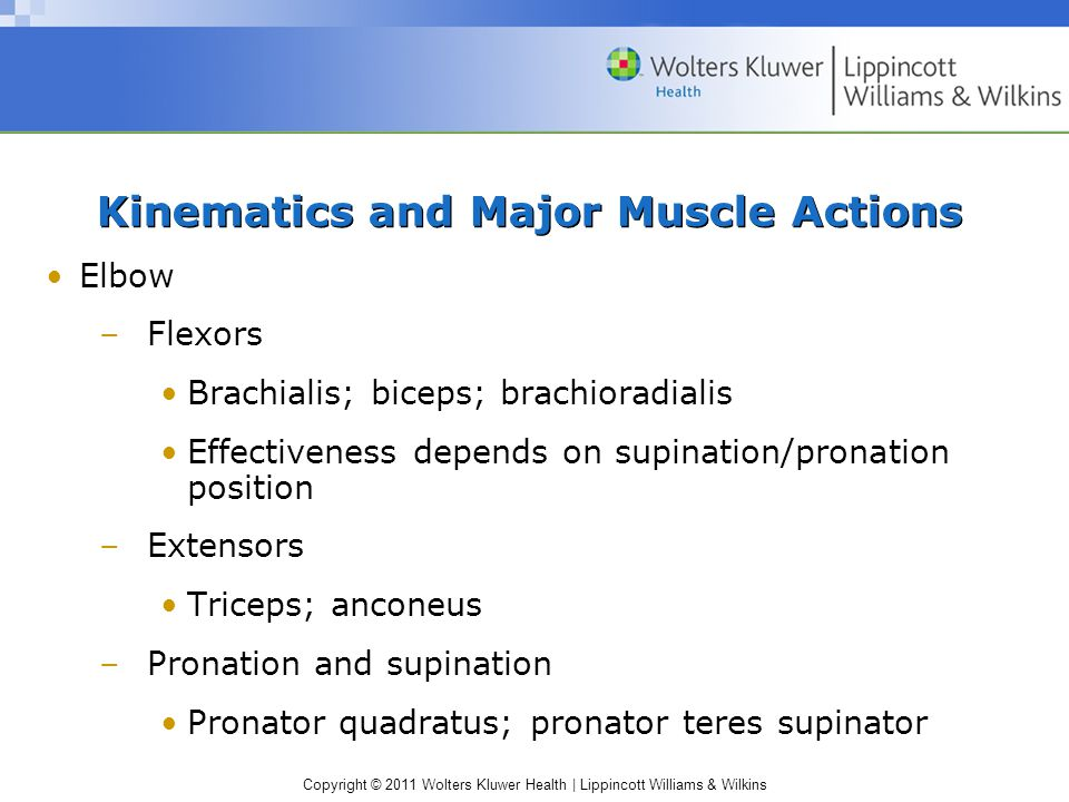 Copyright © 2011 Wolters Kluwer Health | Lippincott Williams & Wilkins Kinematics and Major Muscle Actions Elbow –Flexors Brachialis; biceps; brachioradialis Effectiveness depends on supination/pronation position –Extensors Triceps; anconeus –Pronation and supination Pronator quadratus; pronator teres supinator