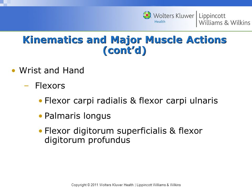 Copyright © 2011 Wolters Kluwer Health | Lippincott Williams & Wilkins Kinematics and Major Muscle Actions (cont'd) Wrist and Hand –Flexors Flexor car