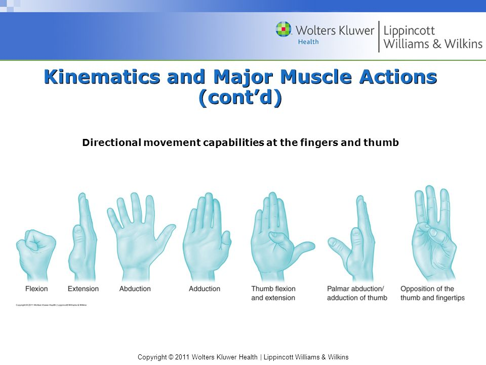 Copyright © 2011 Wolters Kluwer Health | Lippincott Williams & Wilkins Kinematics and Major Muscle Actions (cont'd) Directional movement capabilities
