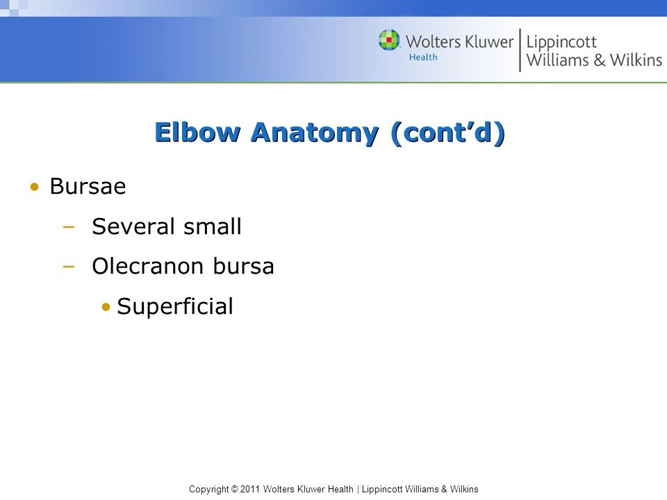 Copyright © 2011 Wolters Kluwer Health   Lippincott Williams & Wilkins Elbow Anatomy (cont'd) Bursae –Several small –Olecranon bursa Superficial
