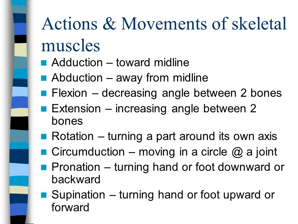 Actions & Movements of skeletal muscles Adduction – toward midline Abduction – away from midline Flexion – decreasing angle between 2 bones Extension
