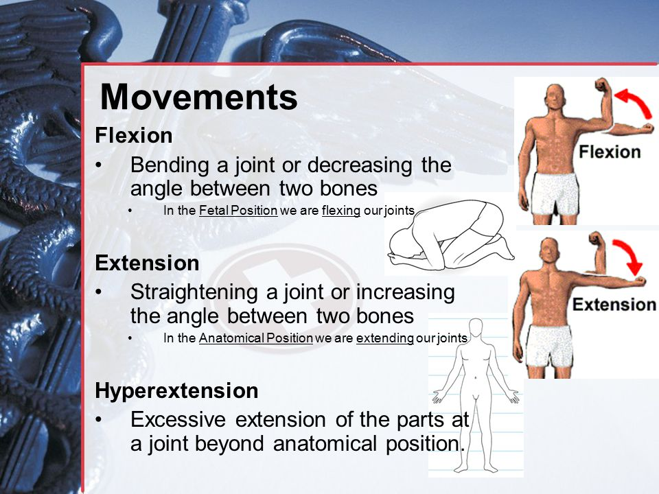 Movements Flexion Bending a joint or decreasing the angle between two bones In the Fetal Position we are flexing our joints Extension Straightening a