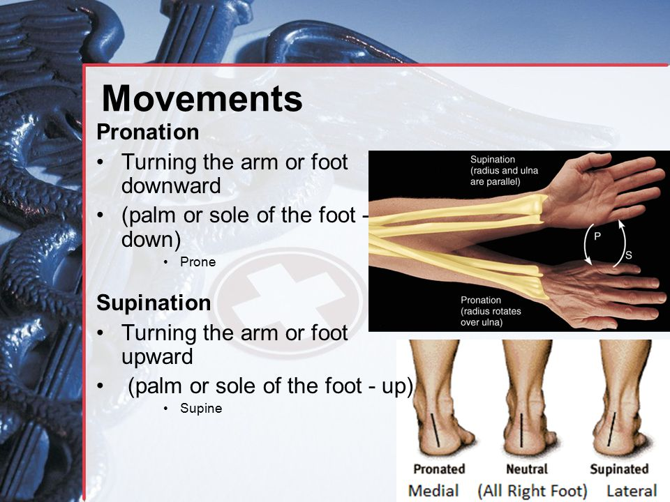 Movements Pronation Turning the arm or foot downward (palm or sole of the foot - down) Prone Supination Turning the arm or foot upward (palm or sole o
