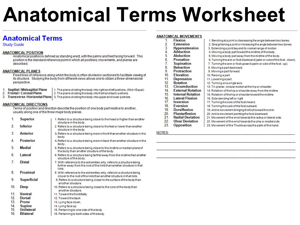 Printables Medical Terminology Worksheet worksheets anatomical terminology worksheet laurenpsyk free medical position directional terms and worksheet