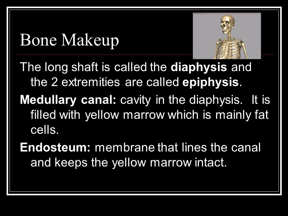 Bone Makeup The long shaft is called the diaphysis and the 2 extremities are called epiphysis.