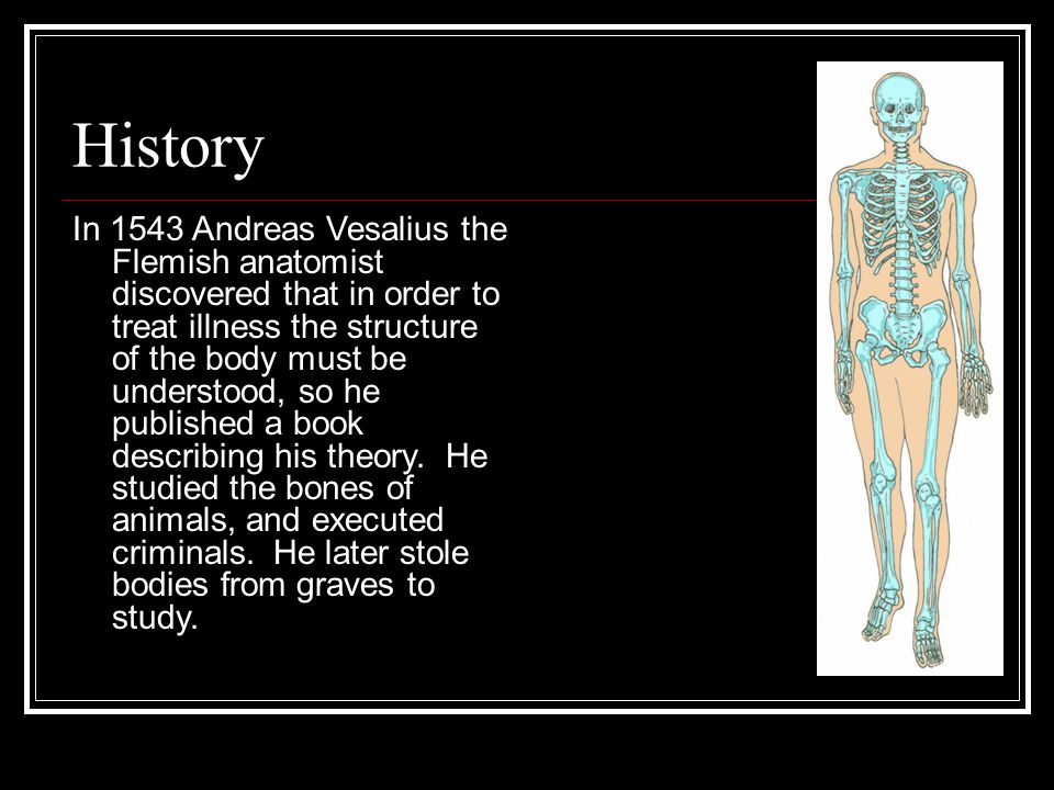 Skeletal System There are over 300 bones in the newborn, but only 206 in the adult.