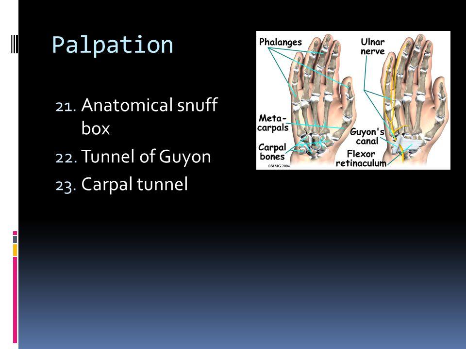 Palpation 21. Anatomical snuff box 22. Tunnel of Guyon 23. Carpal tunnel