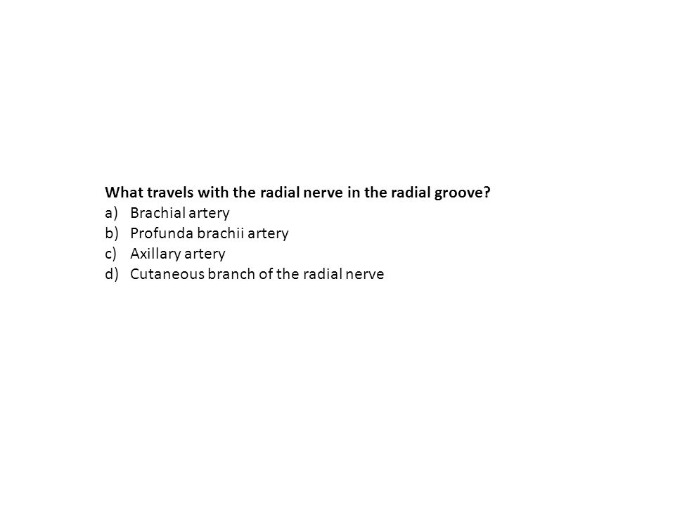 What travels with the radial nerve in the radial groove? a)Brachial artery b)Profunda brachii artery c)Axillary artery d)Cutaneous branch of the radia