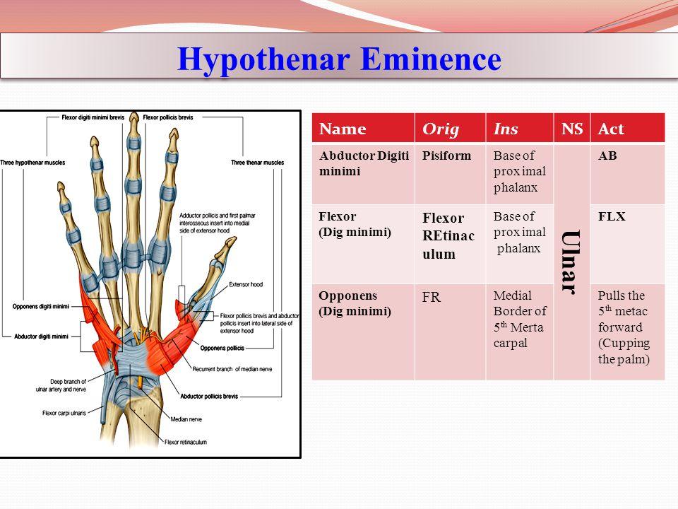 Hypothenar Eminence ActNSInsOrigName AB Ulnar Base of prox imal phalanx PisiformAbductor Digiti minimi FLXBase of prox imal phalanx Flexor REtinac ulu