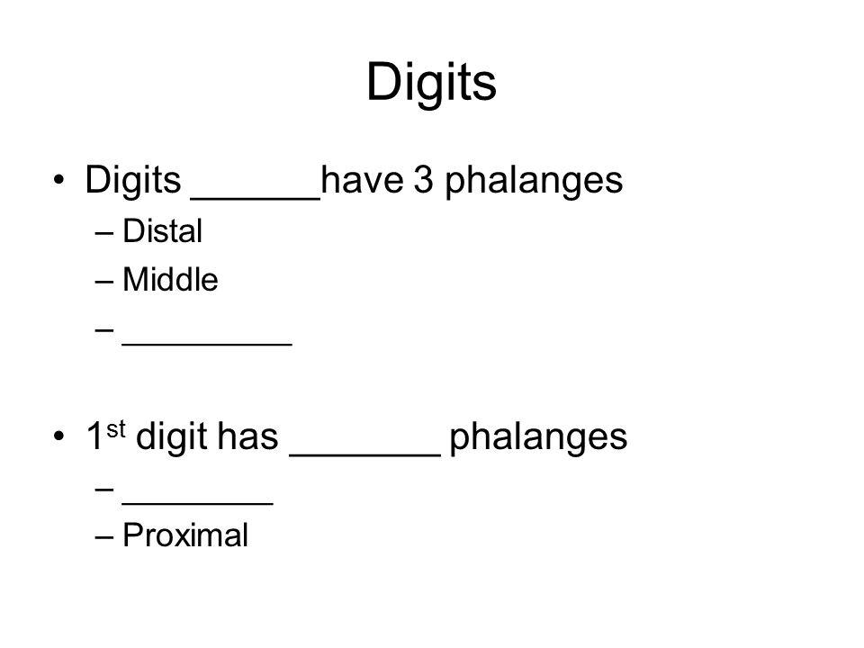 Digits Digits ______have 3 phalanges –Distal –Middle –_________ 1 st digit has _______ phalanges –________ –Proximal