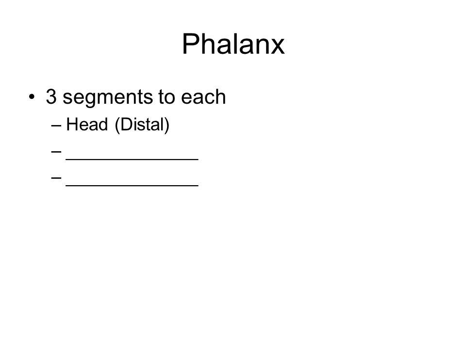 Phalanx 3 segments to each –Head (Distal) –_____________