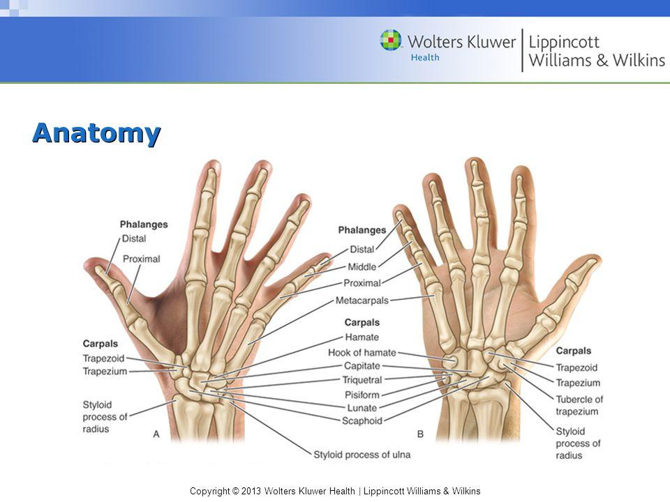 Copyright © 2013 Wolters Kluwer Health   Lippincott Williams & Wilkins Neurologic Tests Myotomes –Scapular elevation - C4 –Shoulder abduction - C5 –Elbow flexion and/or wrist extension - C6 –Elbow extension and/or wrist flexion - C7 –Thumb extension and/or ulnar deviation - C8 –Abduction and/or adduction of fingers - T1 Reflexes –Biceps - C5-C6 –Brachioradialis - C6 –Triceps – C7