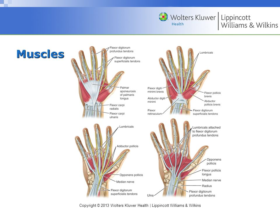 Copyright © 2013 Wolters Kluwer Health   Lippincott Williams & Wilkins Dislocations (cont.) –S&S: swollen, painful finger –Management: immobilization; ice; immediate physician referral