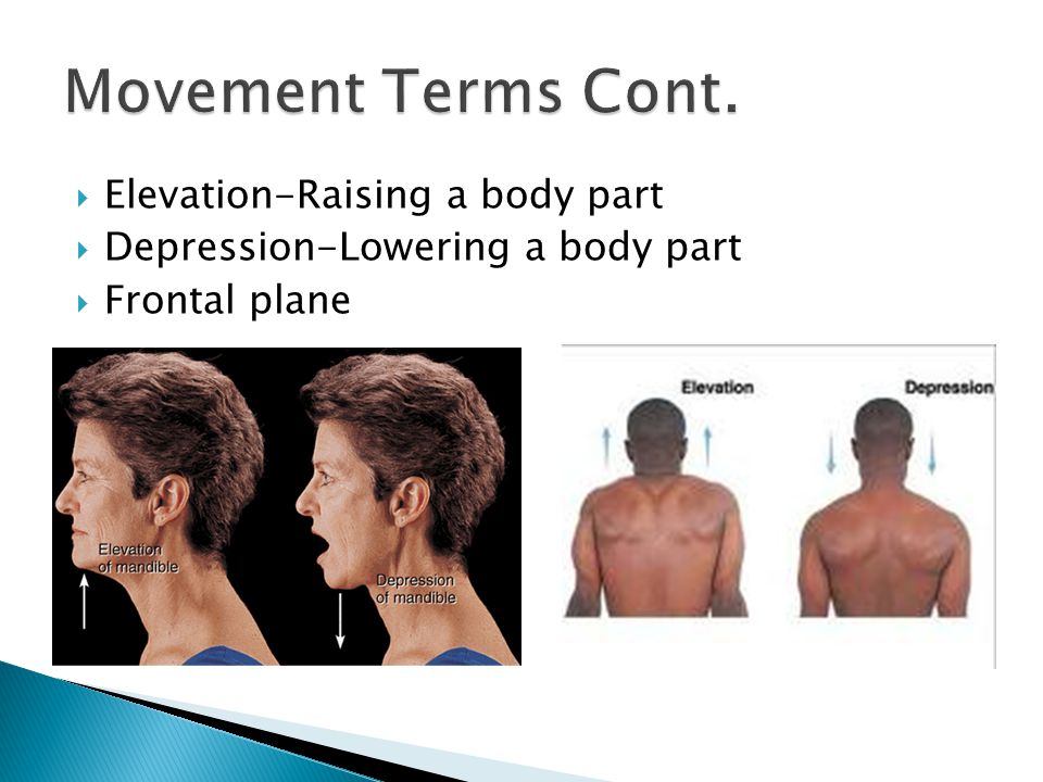  Elevation-Raising a body part  Depression-Lowering a body part  Frontal plane