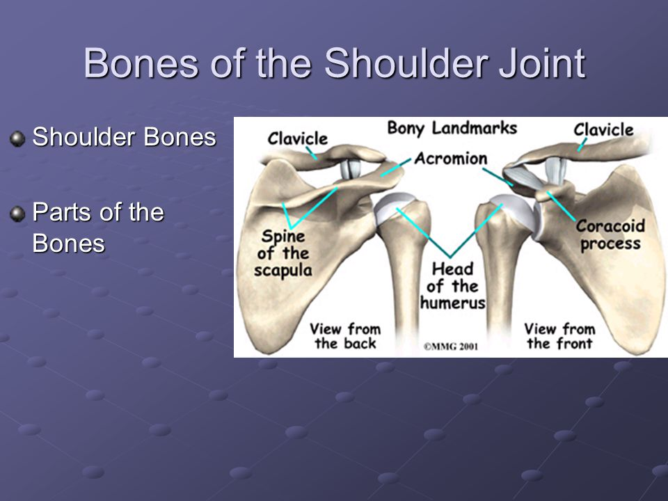 Chapters 16, 17, 18 Shoulder, Elbow, Wrist, and Hand