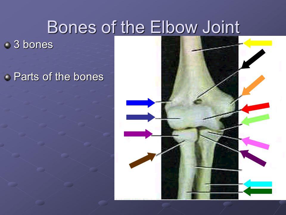 Bones of the Shoulder Joint Shoulder Bones Parts of the Bones