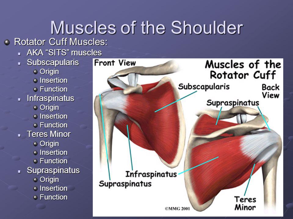Ranges of Motion Shoulder Abduction Abduction Adduction Adduction Flexion Flexion Extension Extension Internal Rotation Internal Rotation External Rot