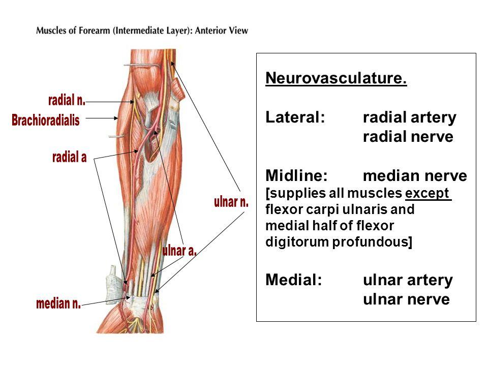 Neurovasculature.