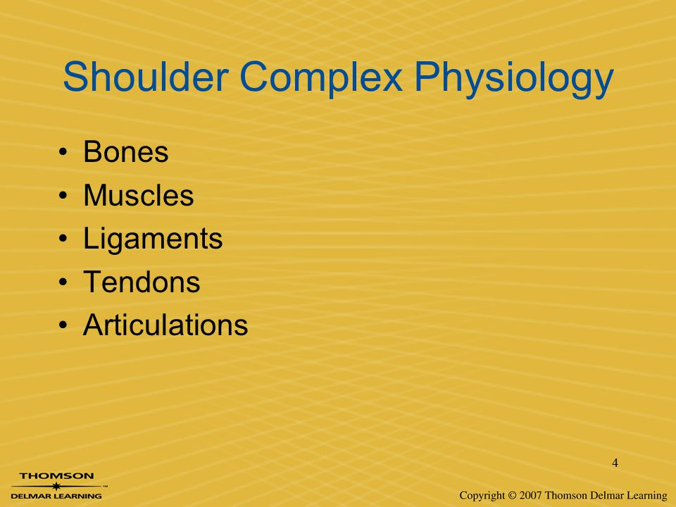 4 Shoulder Complex Physiology Bones Muscles Ligaments Tendons Articulations