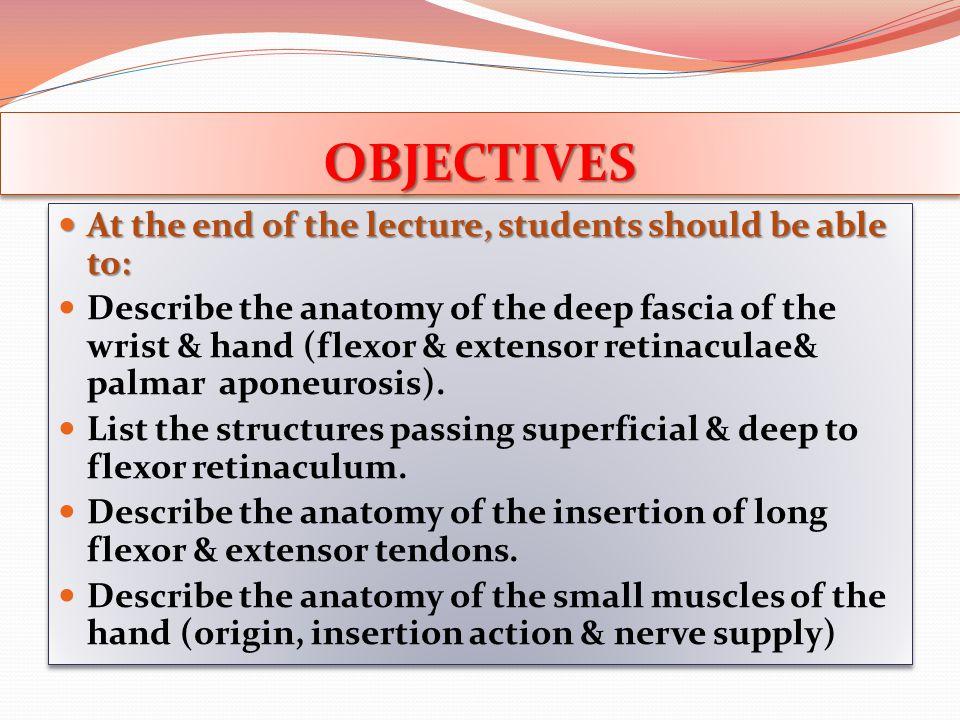 Insertion of Flexor Dig Superficialis Each tendon 1.